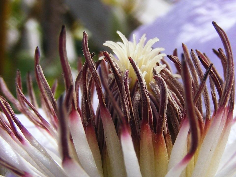 Aleksander Zadel_flower-stamen-nature-plant-blossom