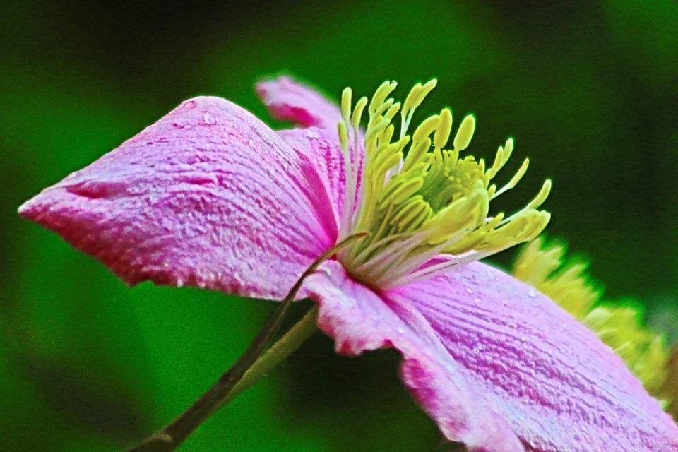 Igor Kononenko_flower-pink-stamen-nature-floral