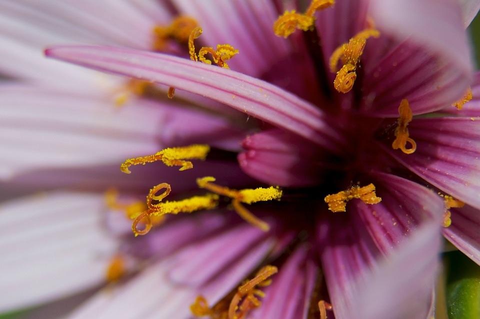 Marko Geršak_flower-closeup-flora-bloom-color